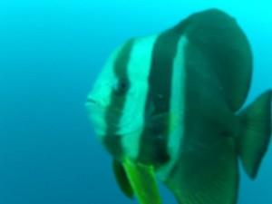 P Diving 3